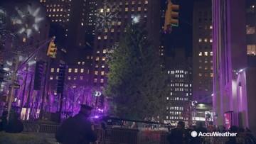 Crowd gathers to watch Christmas tree shine