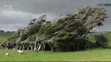 Wacky, Windblown Trees Grow Sideways on New Zealand's Southernmost Point