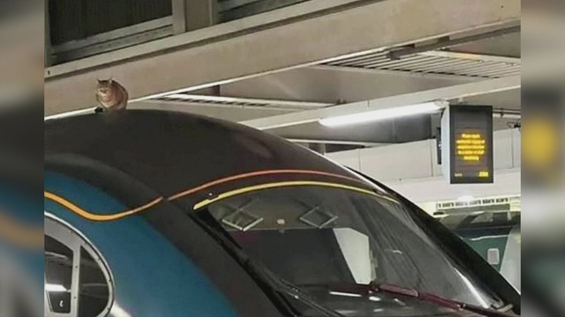 Careless Kitty! A High-Speed Train Was Stopped From Leaving the Station After a Cat Was Spotted on the Roof!