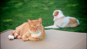 The Truth About (Having Both) Cats and Dogs