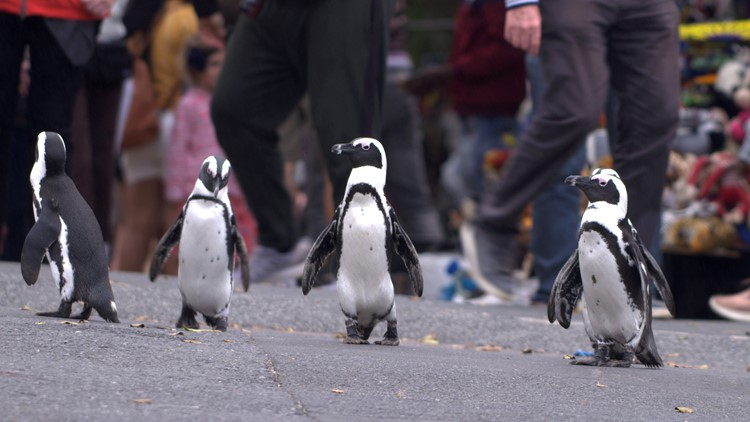 Waddling into the spotlight are the stars of Netflix's 'Penguin Town'
