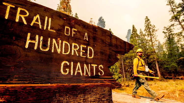 Authorities: Sequoia National Park's Giant Forest not hurt by wildfire