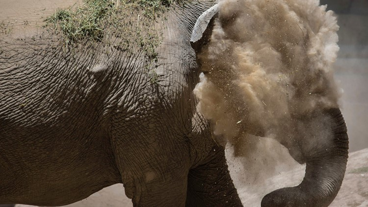 APTOPIX Argentina Elephant