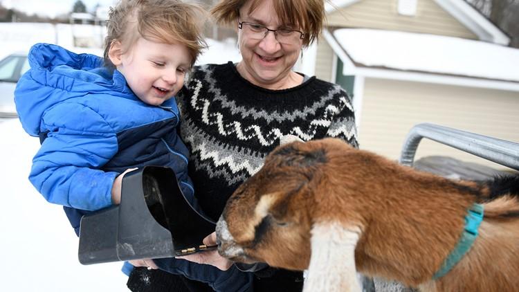 ODD Goat Mayor Vermont Fair Haven