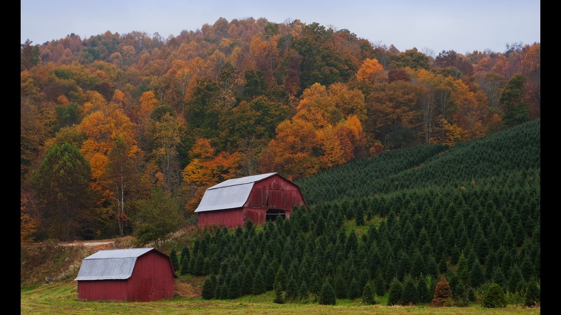 Christmas Tree Farm Tennessee