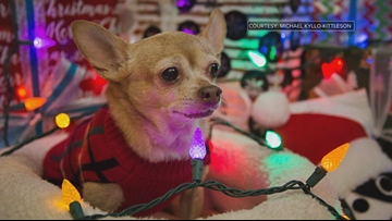 Hospice program gives terminally ill shelter animals a home for their final days