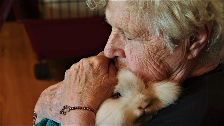 Seniors get bunny hugs, thanks to a soft-hearted teen with a plan