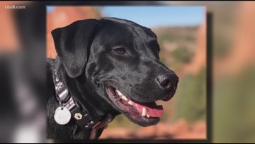 San Diego couple reunited with dog who went missing after surviving deadly Arizona car crash