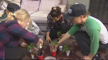 San Diego class teaches students how to grow their own cannabis