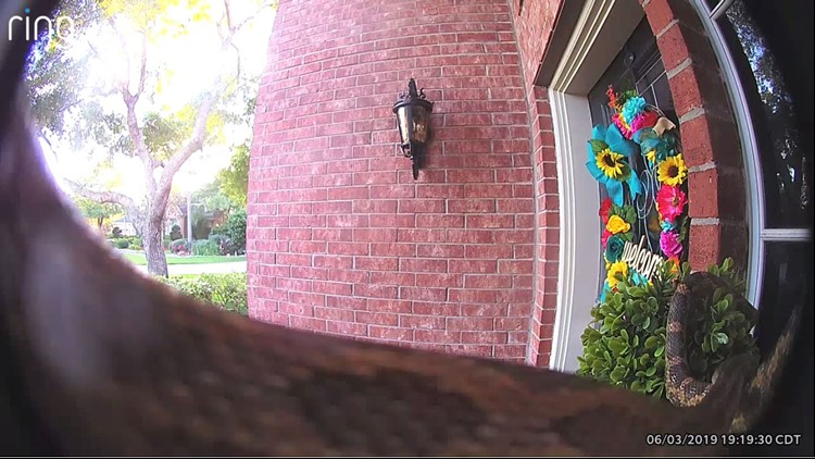 Watch: Doorbell camera captures large snake outside Texas home