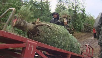 You can now get a permit online to cut down a Christmas tree in some National Forests in Washington