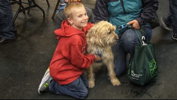 7-year-old finds new homes for over 1,500 dogs - 12 Under 12