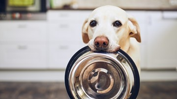 Tips to keep your dog mentally and physically healthy during quarantine