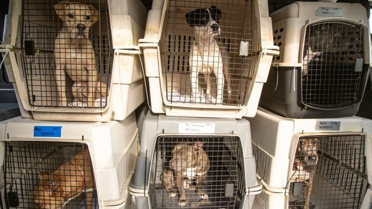 40 pets displaced by Hurricane Ida being cared for in Arizona
