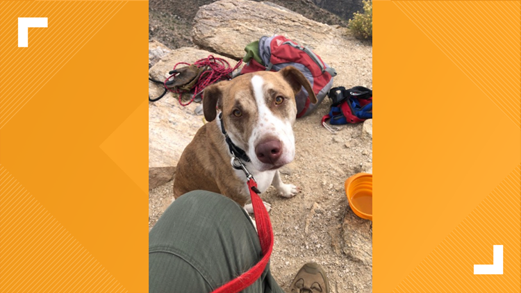 A dog escaped his house while his owner was out of town. Arizona deputies rescued him from the side of a cliff.
