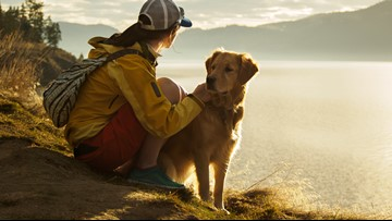 9 tips for keeping your dog safe and its tail wagging while hiking