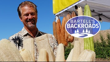 Home grown bath sponges from a Central Valley garden | Bartell's Backroads