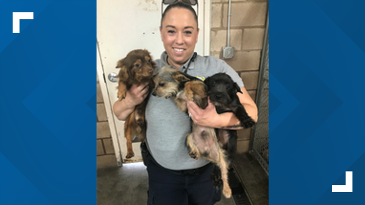 Turlock police to hold adoption drawing for 49 rescued dogs if they don't find rightful owners