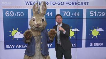 'Peter Rabbit' visits ABC10 for a special weather forecast ahead of visit to Shriners Hospital