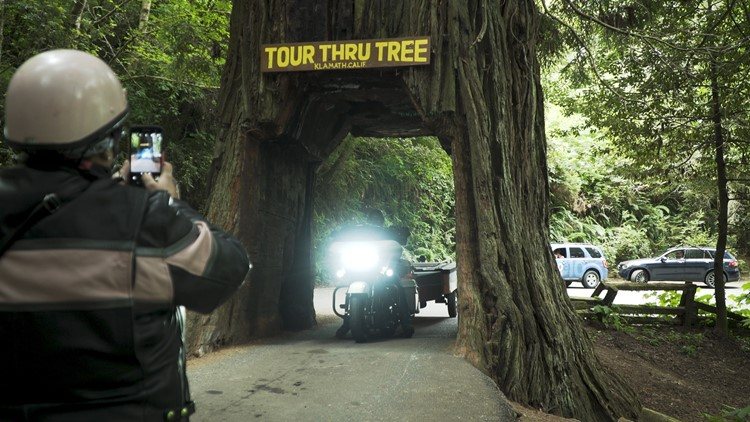 Tour Thru Tree_Bartell's Backroads