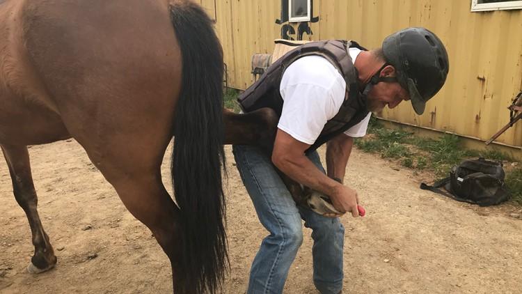 Sacramento Sheriff's Inmate horse training program