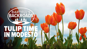 Springtime is tulip time in Modesto | Bartell's Backroads