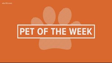 Pet of the Week: Coleman