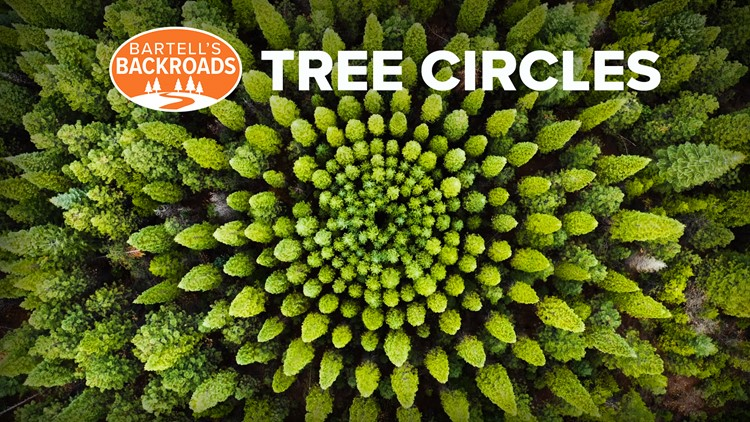 The mystery of Eldorado National Forest's circular tree groves explained | Bartell's Backroads
