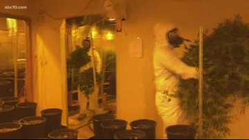 Rancho Cordova police take huge step to bust illegal weed grows