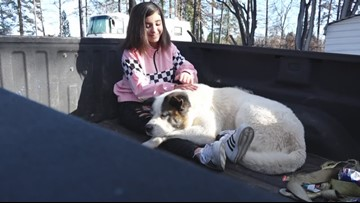 Camp Fire Reunion: Paradise family reunites with dog 101 days after being separated
