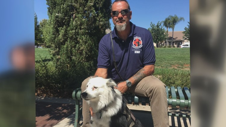 PAWS for the cause: Bill aims at pairing service dogs with veterans who have severe PTSD