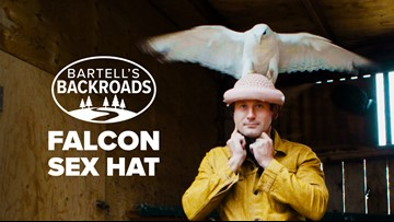 Why a 'sex hat' saved the Peregrine Falcons | Bartell's Backroads