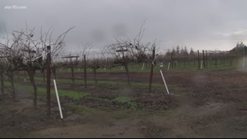 Farmers in Lodi look forward to coming storms