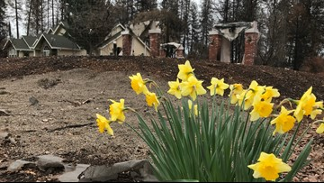 After the Camp Fire, Paradise blooms again