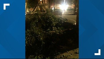 Tree branches falling in midtown, downtown Sacramento may be from the extreme heat
