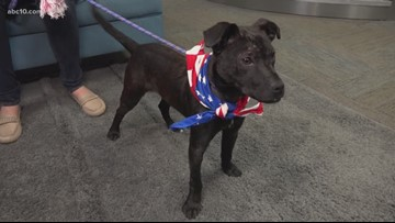Pet of the Week: Archie