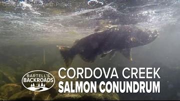 Salmon conundrum in Cordova Creek   Bartell's Backroads