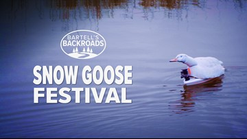 A massive snow goose migration makes its annual stop near Chico | Bartell's Backroads