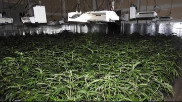 Calaveras County Sheriff's deputies eradicate 5 different marijuana grow sites