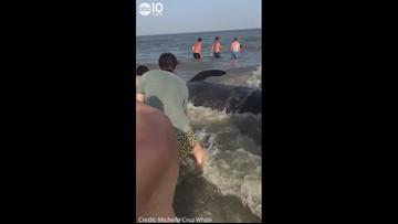 Multiple whales wash up on shore, beachgoers try to help | RAW