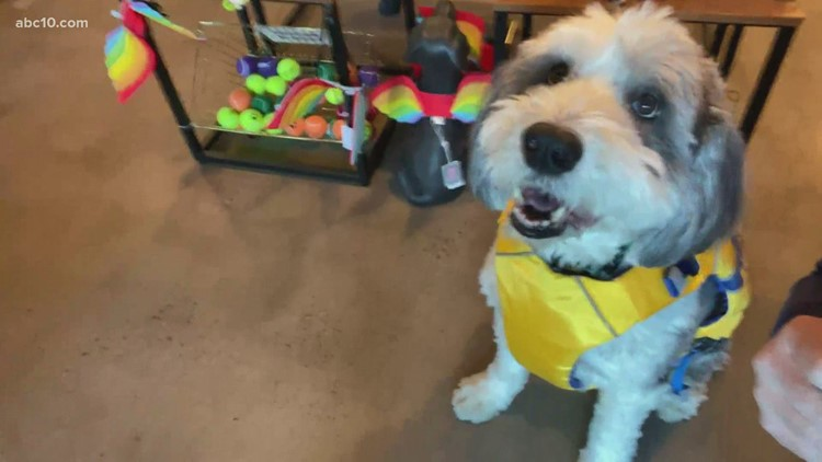 Sacramento pet store's mascot, Max, has helped keep the small business afloat during the pandemic