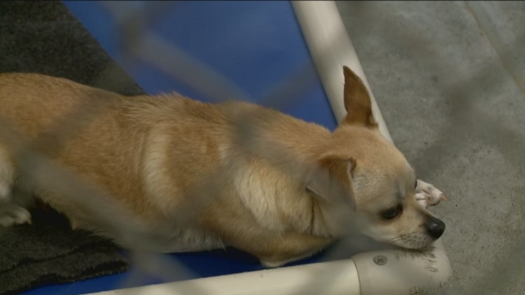 Front Street Animal Shelter beyond maximum capacity, offers free adoptions until July 14