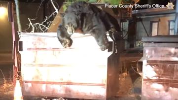 WATCH: Deputies help 'T-Shirt' the bear escape from dumpster at Kings Beach