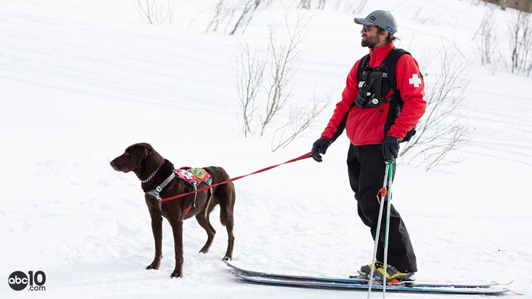 Tahoe Rescue Dogs