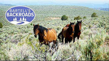 The wild horses of Surprise Valley | Bartell's Backroads
