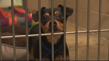 Free dog adoptions from Sacramento SPCA this weekend!