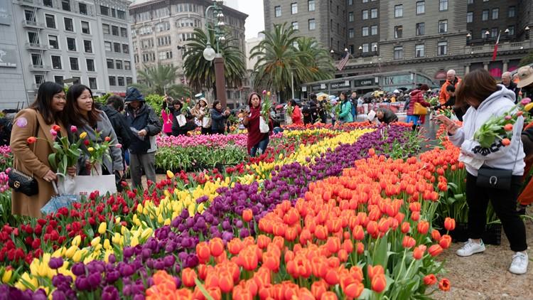 American Tulip Day