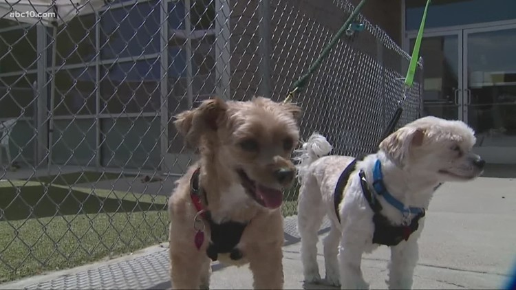 Tips to keep your pets safe during Fourth of July fireworks