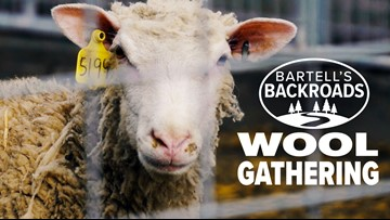 Sheep shearing season in full swing in California | Bartell's Backroads
