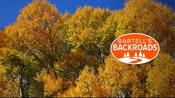 It's peak season for fall colors in Northern California | Bartell's Backroads